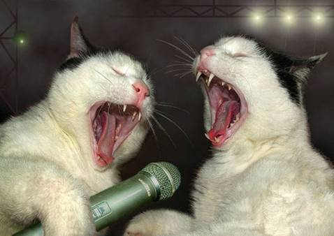 Funny singing pictures